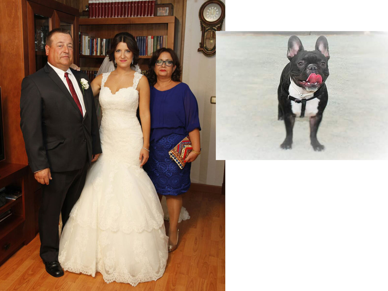 Cuadro bodas plata perro fotos